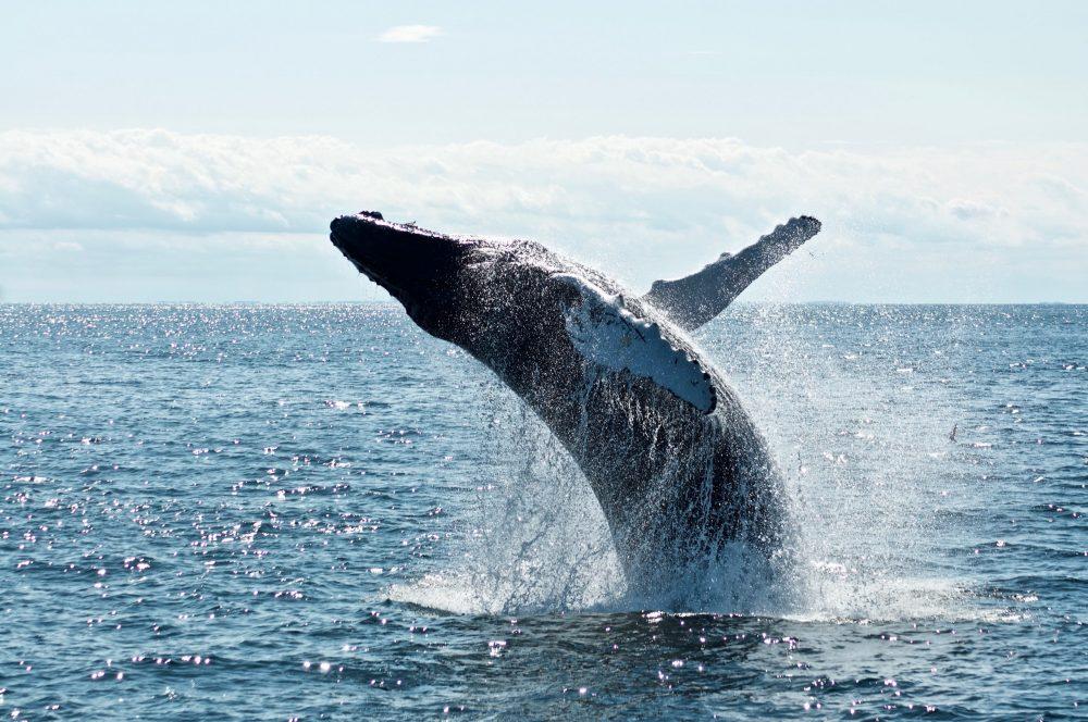Det er ikke for sent at redde verdenshavene